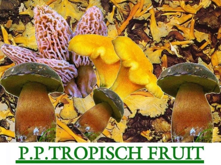 Tropisch Fruit & Paddestoelen